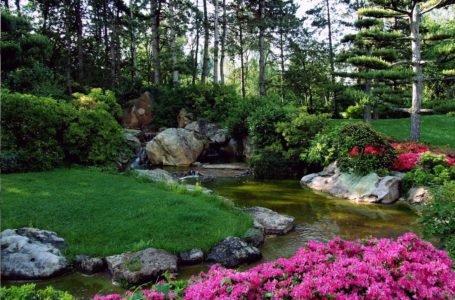 Rabaty kwiatowe w ogrodzie