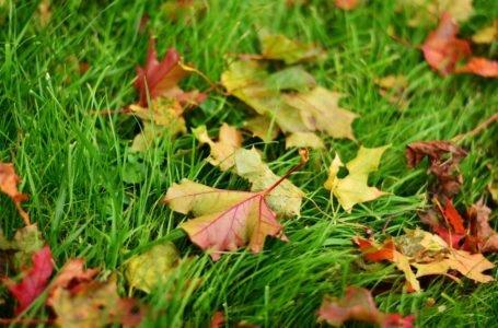 Trawnik – jak przygotować trawnik na zimę