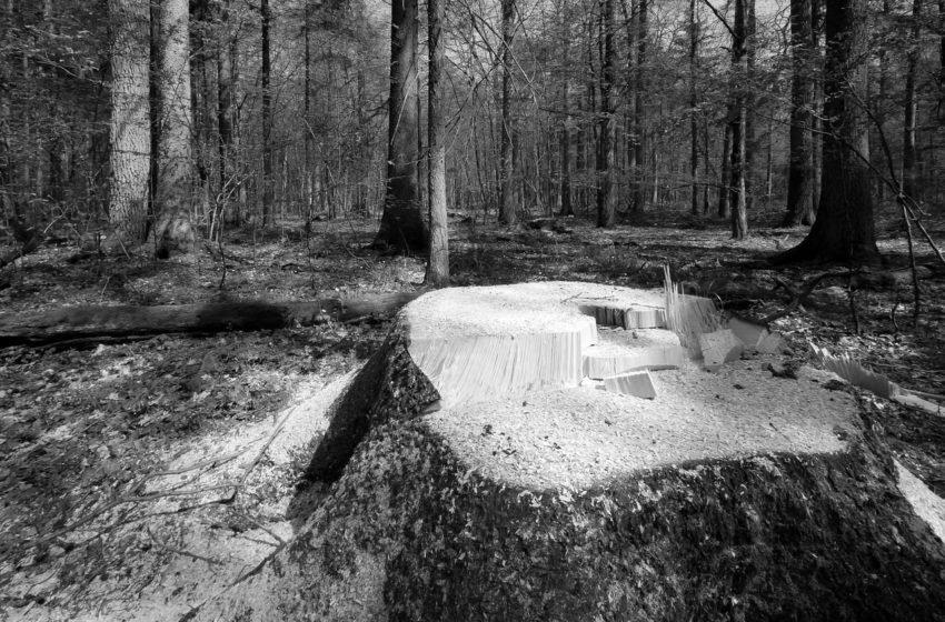 Wycinka drzew na własnej posesji w 2019 roku - co mówi prawo