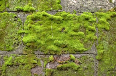 W jaki sposób pozbyć się mchu ze ścian, ogrodzenia czy innych nawierzchni?
