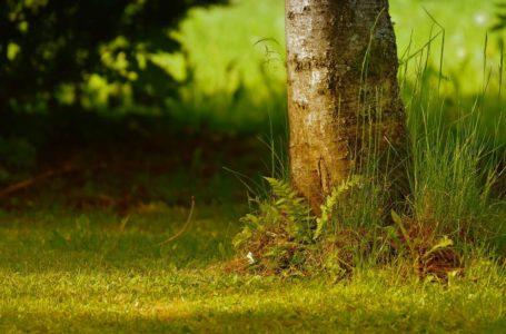 Jakie gatunki drzew sadzić w małych ogrodach?